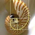 黃金比率,神奇數字, 黃金比率及神奇數字來源及教學, 小龍江恩研究社