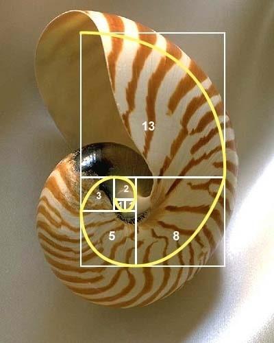 黃金比率,恒生指數,Leonardo Fibonacci, 自然界的奇蹟-黃金比率教學, 小龍江恩研究社